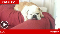 Jack Osbourne's Dog -- Gut Wrenching Memorial