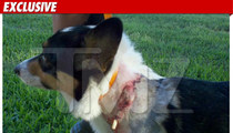 Jesse James Pays Up After Bloody Dog Attack