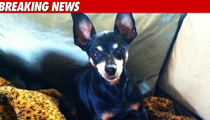 Dane Cook Finds Lost Dog with Twitter Help