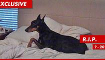 Salahi Dog Dies ... Of Broken Heart?