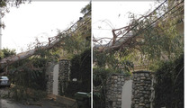 Eric Dane & Rebecca Gayheart -- Insane California Winds Knock Tree Down on Their House