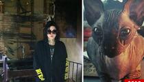 Kat Von D Sued Over Cat-Killing Fire