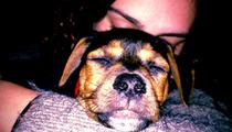 Rumer Willis -- I FOUND MY DOG!!!