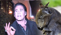 Wayne Newton -- Sorry, That's NOT My Wallaby