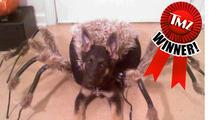 TMZ's Doggie Dress Up Contest -- WINNER!