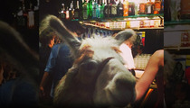 'Llama Cop' Star -- E-Llama-nated from Hollywood Nightclub Scene