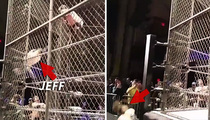 Wrestling Star Jeff Hardy -- Knocked Out Cold After SCARY Fall From Cage (VIDEO)