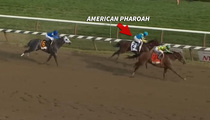 American Pharoah -- Down Goes The Champ ... Loses After Crazy Finish