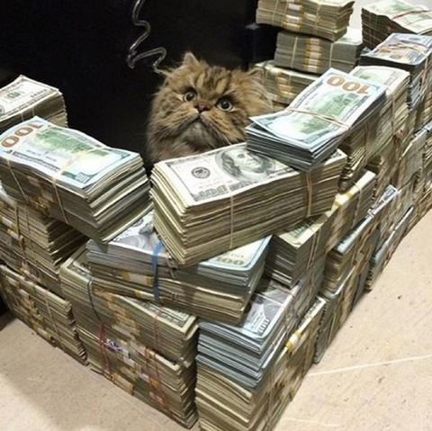 <p>Instagram is full of cool cat photos ... but there's one kitty account that makes them all look like litter!</p> <p><span>@Cashcats</span>is a VIP account for only the most prosperous of house pets ... with each feline photo including crazy amounts of cold hard cash!</p>