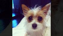 Tori Spelling -- My Tiny Dog Has Gone Missing!