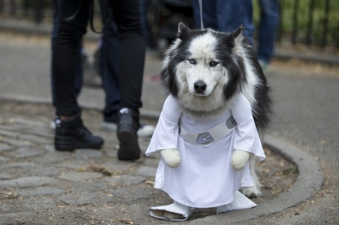 <span>What's cuter than a parade of dogs? A parade of dogs dressed up in Halloween costumes! The cute canines took their costumes to the streets of NYC to preview their holiday attire.</span>