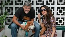 George and Amal Clooney to the Rescue Dog