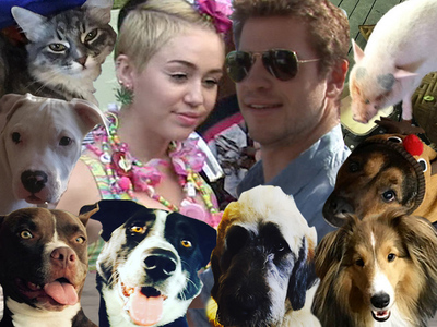 Miley Cyrus -- Liam's House Goes to the Dogs