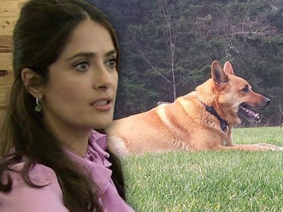 Salma Hayek -- Cops Say Neighbor Had Right to Shoot Dog
