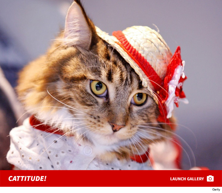 Cats In Costume Compete For Miss Meow Title -- See The Feline Photos & Cats In Costume Compete For Miss Meow Title -- See The Feline Photos ...