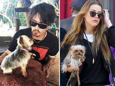 Johnny Depp, Amber Heard -- A Dog House Divided