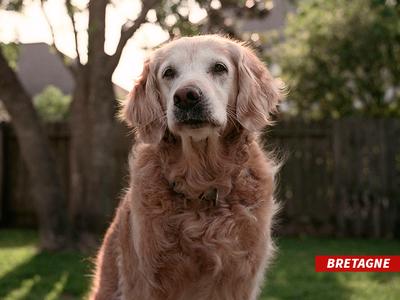 Last Known 9/11 Rescue Dog Dies