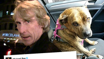 Michael Bay -- My New Movie Star Is the World's Loneliest Dog