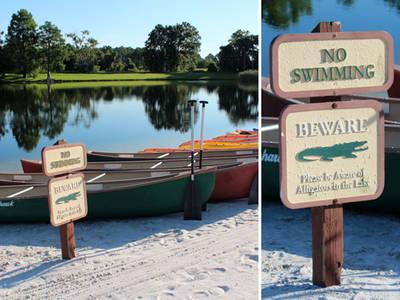 Disney Attack -- Neighboring Resort Warned of Alligators (PHOTOS)