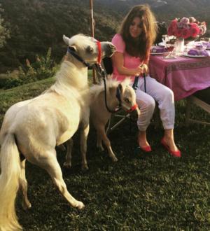 Lisa Vander-Pets