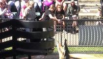 Bindi Irwin -- I'm Finally 18! And It's a Total Croc ... (VIDEO)