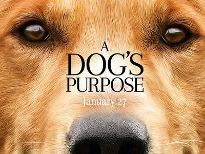 'A Dog's Purpose' Premiere Canceled