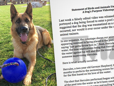 'A Dog's Purpose' Trainers Deny Wrongdoing, Claim Video Was 'Falsely Edited' (DOCUMENT)