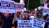 'A Dog's Purpose' Opens to PETA Protests (VIDEO)