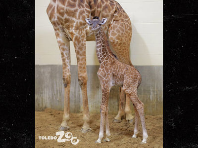 Giraffe Gives Birth But It's Not April