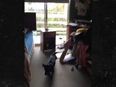 Dog Runs for Life in 7.1 Magnitude Earthquake in Chile (VIDEO)