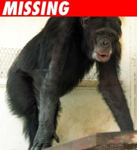 0630_moe_the_chimp_missing-1.jpg