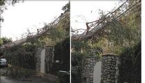 Eric Dane & Rebecca Gayheart -- Insane California Winds Knock Tree Down on Their House