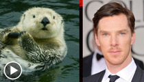 'War Horse' Star Benedict Cumberbatch -- The Otter Side of Fame