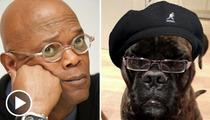 Samuel L. Jackson Has a Doggie Knockoff -- Samuel L. DOGSON