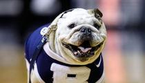 RIP Blue II -- Spoiled Butler Bulldog ... Dead at Age 9