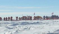 Prince Harry -- Kicking Alexander Skarsgard's Ass in South Pole Race