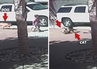 Hero Cat Saves Boy from Dog Attack [VIDEO]