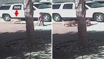 Hero Cat -- Attack Dog Euthanized
