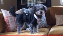 Jason Biggs and Jenny Mollen -- DOG LOST ... Plea For Help