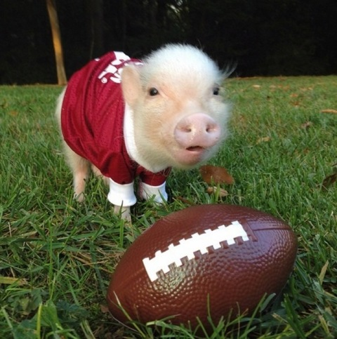 "<p>Instagram's most prized pigs are also fans of the pigskin!</p> <p>Check out the gallery of <a href=""https://www.instagram.com/prissy_pig/"" target=""_blank""><strong>@Prissy_Pig</strong></a> to see the sporty swine dressed in their best football gear to show support of their favorite teams.</p> <p>Are you ready for some football?</p>"