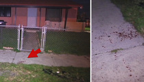 NFL's Stedman Bailey -- Video Of Bloody Crime Scene ... After Drive-By Shooting