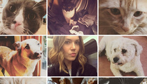 Mandy Moore -- My Divorce Is Going to the Dogs ... and Cats Too