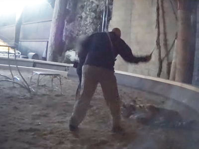 Hollywood Animal Trainer -- Video of Vicious Tiger Whipping (VIDEO)