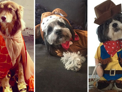 Dress Up Your Pet Day -- See The Decked Out Celebrity Dogs