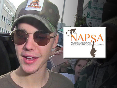 Justin Bieber -- I'm Adopting Another Primate ... Monkey Org Goes Ape