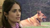 Salma Hayek -- Cops Say Neighbor Had Right to Shoot Dog