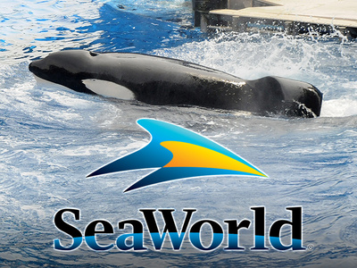 SeaWorld -- 'Blackfish' Whale Tilikum Close To Death