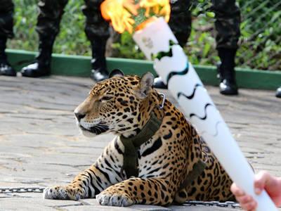 Rio Olympics -- 'Mascot' Jaguar Shot Dead After Torch Ceremony