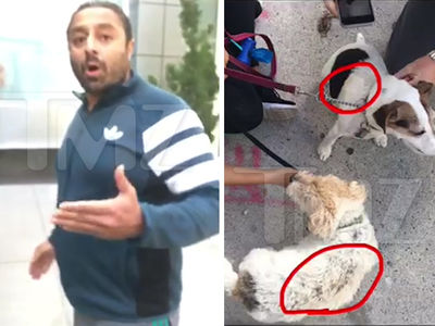 Dream Hotel Founder-- LiLo's Party Pal Accused of Burning Dogs (VIDEO)
