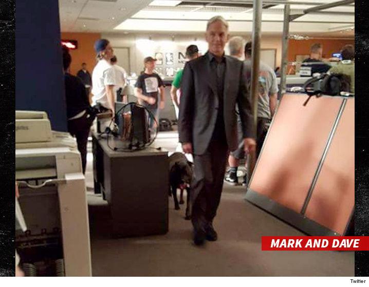 Mark Harmons Dog Attacked Crew Member On Ncis Set Tmzcom